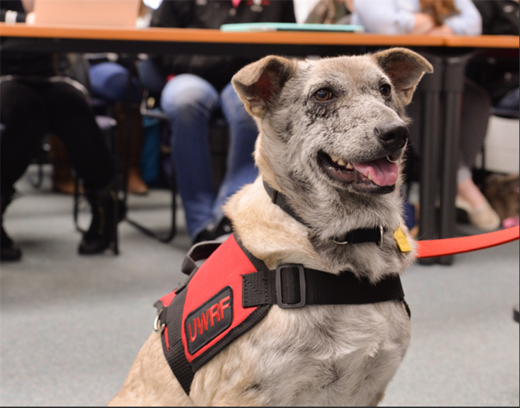 Service Dog Training Schools In Wisconsin