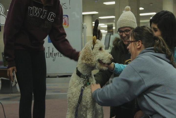 UW-Eau Claire students take study break with therapy dog