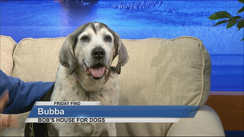 Bob S House For Dogs Eau Claire Wi