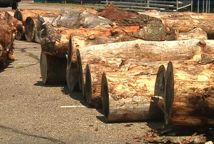 U s open chainsaw sculpture championship begins in eau